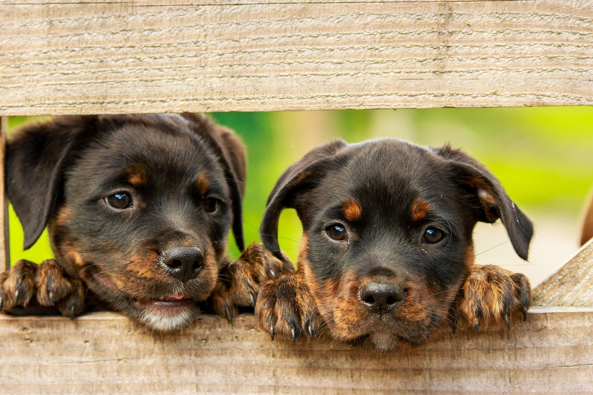 ¿Es obligatorio contratar un seguro para mi perro?